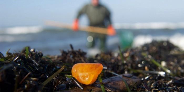 Шторм вынес на берег янтарь в Калининградской области